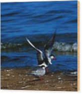 Another One Take A Tern Wood Print