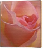 Another Pink Rose Wood Print