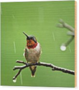 Another Rainy Day Hummingbird Wood Print