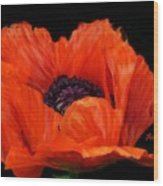 Another Red Poppy Wood Print