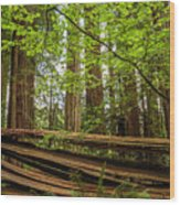 Another Split Redwood Wood Print
