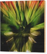 Another Tulip Explosion Wood Print
