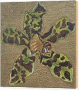 Ansellia Species Wood Print