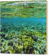 Ant Atoll Reef Wood Print