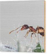 Ant Macro Photography Wood Print