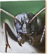 Ant Smile Wood Print by Ryan Kelly