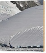 Antarctic Bliss  Wood Print