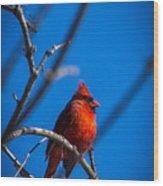 Ante Meridiem Cardinalis Cardinalis Wood Print