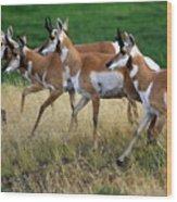 Antelope 1 Wood Print