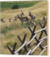 Antelope 2 Wood Print