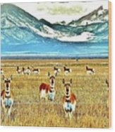 Antelope At Attention Wood Print