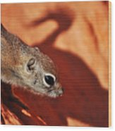 Antelope Ground Squirrel II Wood Print