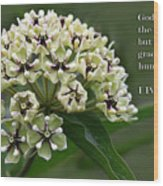 Antelope Horns Wildflower With Scripture Wood Print