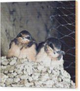 Antelope Island Birds Wood Print