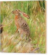 Antelope Jackrabbit Wood Print