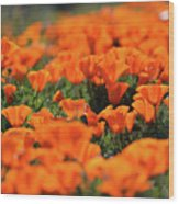 Antelope Valley California Poppies Wood Print