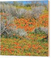 Antelope Valley Poppies Wood Print