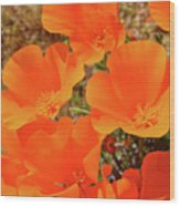 Antelope Valley Poppy Portrait Wood Print
