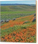 Antelope Valley Poppy Reserve Wood Print