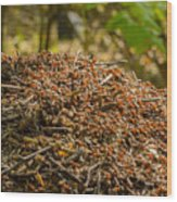 Anthill In Forest Wood Print