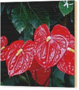 Anthurium Andreanum Wood Print