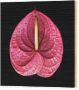 Anthurium Five Wood Print