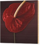 Anthurium Wood Print