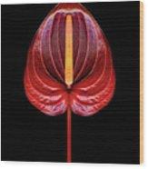 Anthurium Red Wood Print