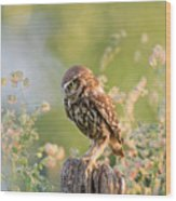 Anticipation - Little Owl Staring At Its Prey Wood Print