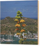 Antigua National Flower  Wood Print