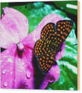 Antillean Crescent Butterfly On Impatiens Wood Print
