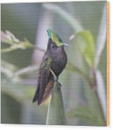 Antillean Crested Hummingbird Wood Print