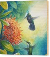 Antillean Crested Hummingbirds And Ixora Wood Print