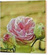 Antique Pink Rose Wood Print