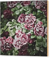 Antique Pink Roses Wood Print