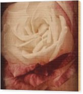 Antique Rose - In Full Bloom Wood Print