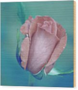 Antique Rose 2 Wood Print