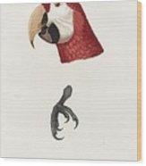 Antique Scarlet Macaw Illustration Wood Print