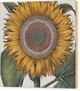 Antique Sunflower Print Wood Print