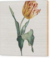 Antique Tulip Print Wood Print