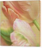 Antique Tulips Wood Print