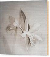 Antique White Orchids Wood Print