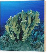 Antler Coral Wood Print