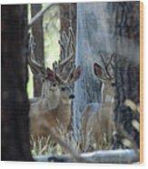 Antlers Galore Wood Print