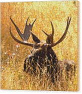 Antlers In The Golden Grass Wood Print