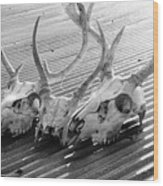 Antlers On Tin Roof Wood Print by Thomas R Fletcher