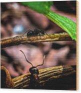 Ants Adventure Wood Print