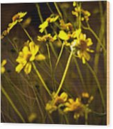 Anza Borrego Desert Sunflower 4 Wood Print