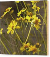 Anza Borrego Desert Sunflowers 1 Wood Print