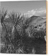 Anza-borrego Yuccas Wood Print